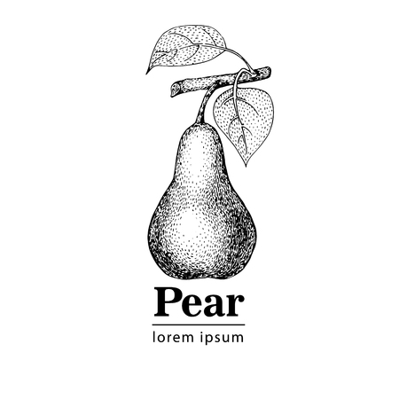 Pear, vintage engraved hector illustration. Retro style