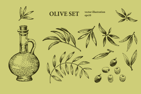 Set of olive tree branch. Engraving hand drawn style. Vector vintage illustrations