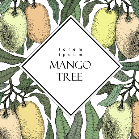 tree: Mango tree vintage design template. Botanical mango fruit frame. Engraved mango. Retro illustration Illustration