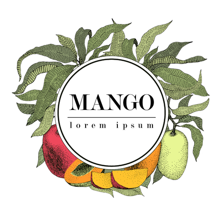 マンゴー ツリーのビンテージ デザイン テンプレートです。植物のマンゴー フルーツ フレーム。刻まれたマンゴー。ロゴ。レトロなイラスト