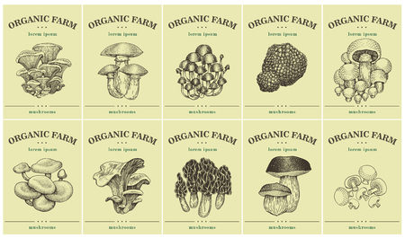 Labels with various Mushrooms. Set templates price tags for shops and markets of organic food. Vector illustration art. Vintage. Hand drawnf nature objects.