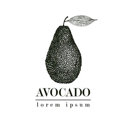 벡터 손으로 그린 아보카도입니다. 열 대 여름 과일 복고 스타일 그림입니다. 상세한 음식 그림. 레이블, 포스터, 인쇄에 적합합니다. 로고 템플릿. 일러스트