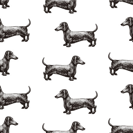 Seamless vector pattern with dogs. Vector illustration of dachshund. Hand drawn retro illustration.