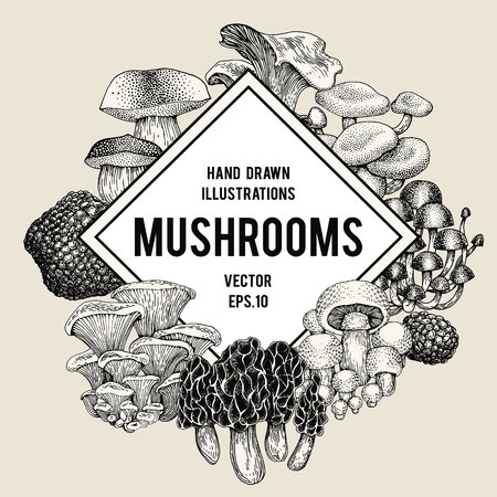 Vector mushroom illustrations. Hand drawn set of different fungus kinds. Vector banner or logo template. Vintage illustration.