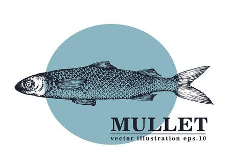 Bergeben Sie gezogene Skizzenmeeresfrüchtevektor-Weinleseillustration von Meeräsche-Fischen. Kann für Menü- oder Verpackungsdesign verwendet werden. Gravierter Stil. Vintage Illustration. Standard-Bild - 90515770