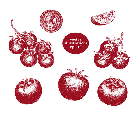 Hand drawn set of tomato and cherry tomato. Engraved sketches. Retro vector illustration.
