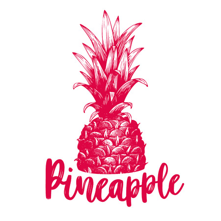 hand drawn pineapple. Tropical summer fruit retro engraved style illustration.