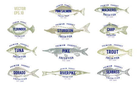 Hand drawn illustrations of fish with names in retro style over white background. Vector logo templates.