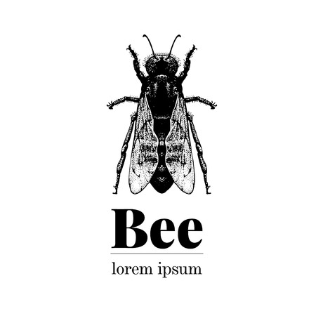 Vector hand drawn bee illustration. Retro style logo template. Inteligent insect illustration.