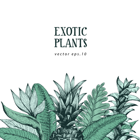Hand brawn botanical background with hand drawn exotic plants and pineapple. Vector banner template. Retro illustration. Illustration
