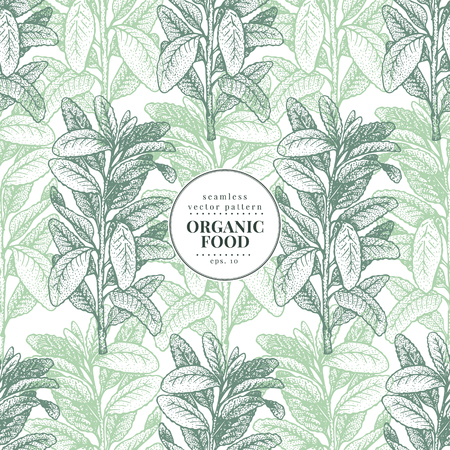 Sage. Vector seamless pattern for design menu, packaging and recipes. Hand drawn vintage illustration. Botanical banner template. Engraved style.