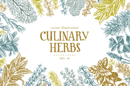 Hand drawn culinary herbs and spices. Vector background for design menu, packaging, recipes, label, farm market products. Hand drawn retro illustration. Botanical banner template.