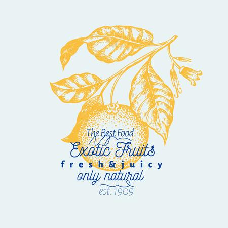 Orange branch illustration. Hand drawn vector fruit illustration. Engraved style. Retro citrus illustration.