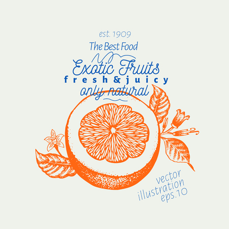 Orange illustration. Hand drawn vector fruit illustration. Engraved style. Retro citrus illustration.
