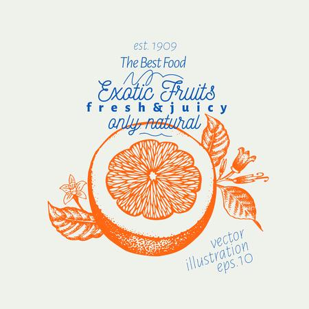 Orange illustration. Hand drawn vector fruit illustration. Engraved style. Retro citrus illustration.