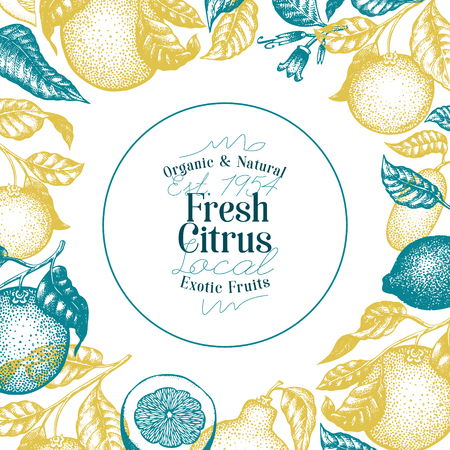 Citrus fruits banner template. Hand drawn vector fruit illustration. Engraved style. Retro citrus background.