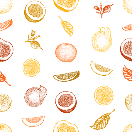 Orange seamless pattern. Hand drawn vector fruit background. Engraved style. Retro citrus illustration.