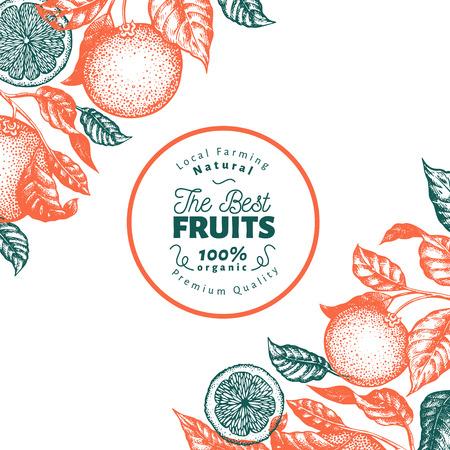 Modello di disegno di frutta arancione. Illustrazione di frutta vettoriale disegnata a mano. Banner in stile inciso. Sfondo retrò di agrumi.