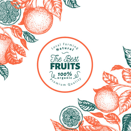 Orange fruit design template. Hand drawn vector fruit illustration. Engraved style banner. Retro citrus background.