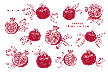 Pomegranate fruit illustrations set. Hand drawn vector fruit illustrations. Engraved style retro botanical background. Can be use for design menu, packaging, recipes, market products. Zdjęcie Seryjne - 125338823