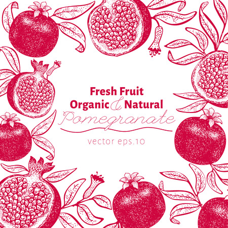 Pomegranate fruit design template. Hand drawn vector fruit illustration. Engraved style retro botanical background. Can be use for design menu, packaging, recipes, market products. Zdjęcie Seryjne - 125338825