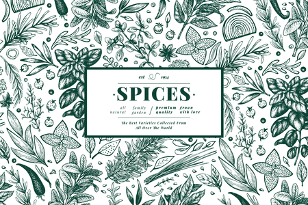 Culinary herbs and spices banner template. Vector background for design menu, packaging, recipes, label, farm market products. Hand drawn retro botanical illustration.