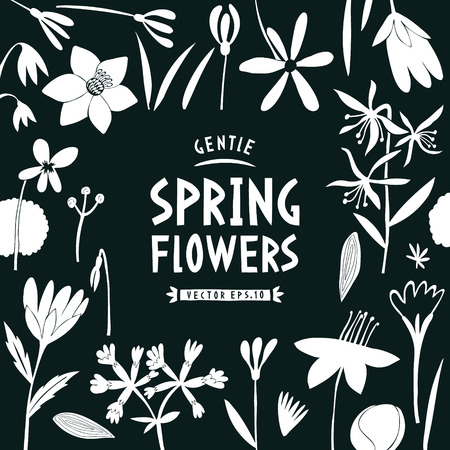 Spring flowers design template. Scandinavian style banner. Hand drawn vector illustrations on dark background. Botanical background. Illustration