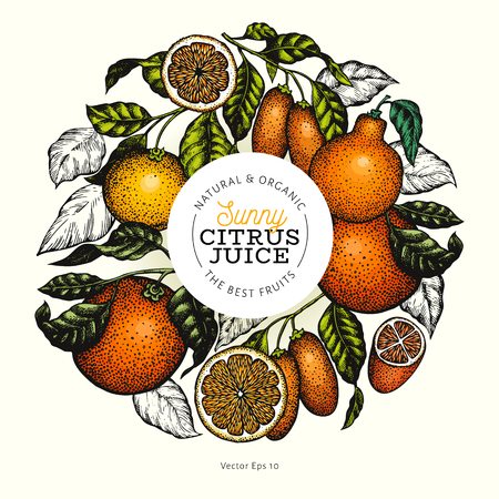 Citrus design templete. Hand drawn vector colour fruit illustration. Engraved style banner. Retro citrus frame. Illustration