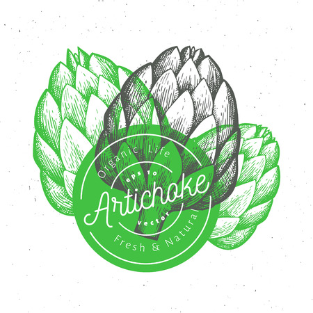 Three artichokes. Hand drawn vector food illustration. Engraved style vegetable. Vintage botanical picture.