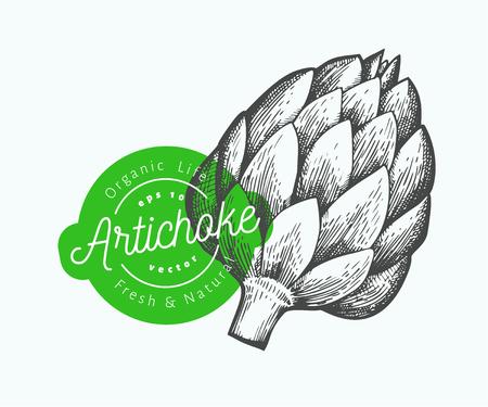 Artichoke vegetable illustration. Hand drawn vector food illustration. Engraved style vegetable. Vintage botanical picture.