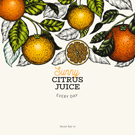 Citrus design template. Hand drawn vector color fruit illustration on dark background. Engraved style banner. Retro citrus frame.