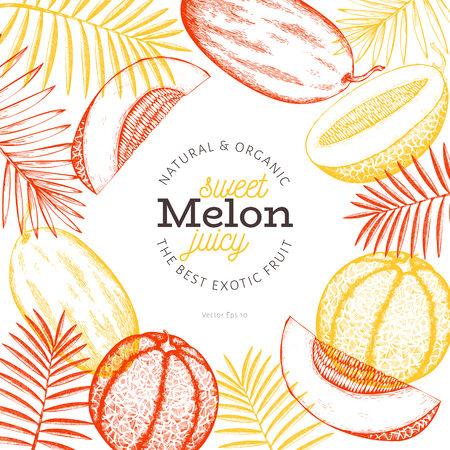 Melons and watermelons with tropical leaves design template. Hand drawn vector exotic fruit illustration. Engraved style fruit banner. Vintage botanical frame.