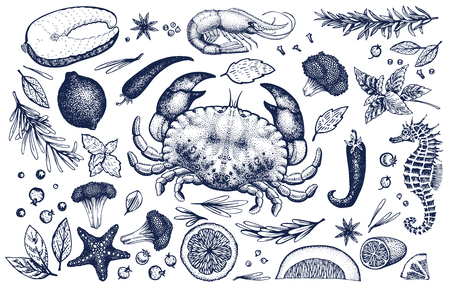 Seafood and spices vector set. Retro hand drawn illustrations. Can be use for restaurants menu, cover, packaging. Vintage background.