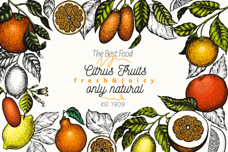 Citrus design templete. Hand drawn vector colour fruit illustration. Engraved style banner. Retro citrus frame. Stock Photo