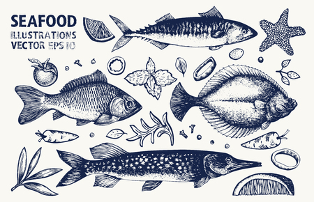 Fishes and spices vector set. Retro hand drawn seafood illustrations. Can be use for restaurants menu, cover, packaging. Vintage background.