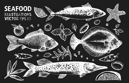 Fishes and spices vector set. Retro hand drawn seafood illustrations on chalk board. Can be use for restaurants menu, cover, packaging. Vintage background.