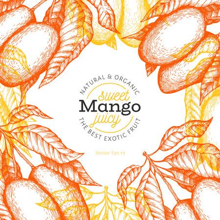 Mango design template. Hand drawn vector tropic fruit illustration. Engraved style fruit. Retro exotic food banner.