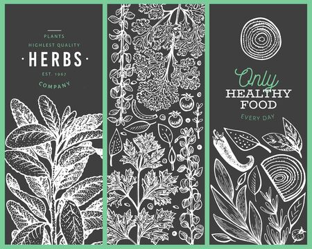 Set of tree culinary herbs banner templates. Hand drawn vintage botanical illustration on chalk board. Engraved style designs. Retro food background.