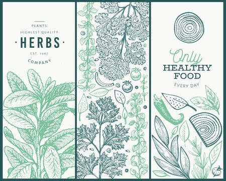 Set of tree culinary herbs banner templates. Hand drawn vintage botanical illustration. Engraved style designs. Retro food background.