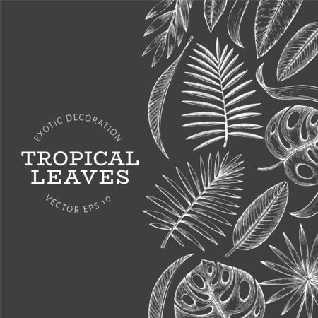 Tropical plants banner design. Hand drawn tropical summer exotic leaves illustration on chalk board. Jungle leaves, palm leaves engraved style. Retro background design
