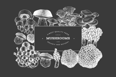 Mushrooms design template. Vector hand drawn illustrations on chalk board. Mushroom in vintage style. Autumn food background.