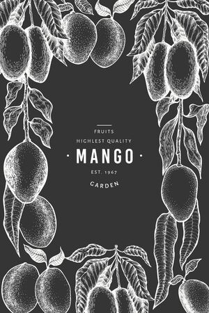 Mango design template. Hand drawn vector tropic fruit illustration on chalk board. Engraved style fruit. Retro exotic food banner.