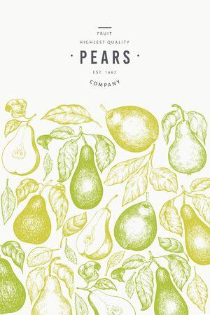 Pear design template. Hand drawn vector garden fruit illustration. Engraved style garden fruit frame. Vintage botanical banner.