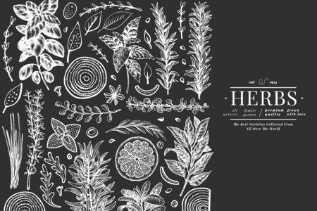 Modello di banner di erbe culinarie. Illustrazione botanica disegnata a mano sulla lavagna. Stile inciso. Sfondo di cibo d'epoca.