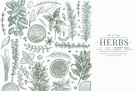 Culinary herbs banner template. Hand drawn botanical illustration. Engraved style. Vintage food background. 向量圖像