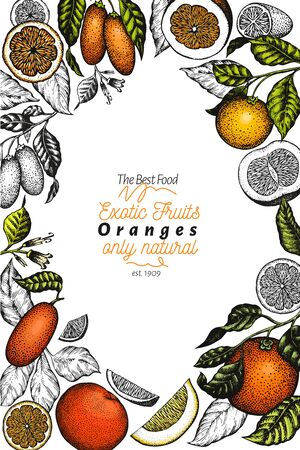Citrus design template. Hand drawn vector colour fruit illustration. Engraved style frame. Retro citrus banner. Illustration