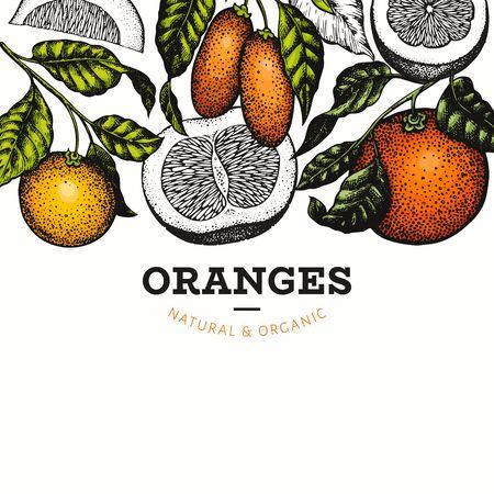 Citrus design template. Hand drawn vector colour fruit illustration. Retro citrus banner.