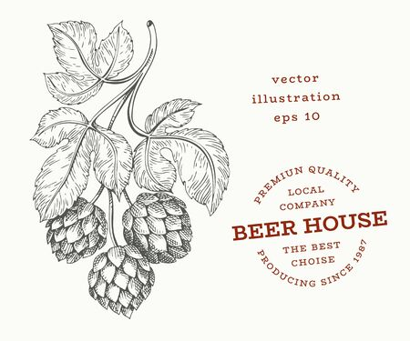 Beer hop illustration. Hand drawn vector botanical illustration. Engraved style. Vintage brewery illustration.