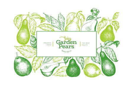 Pear design template. Hand drawn vector garden fruit illustration. Engraved style garden vintage botanical banner.