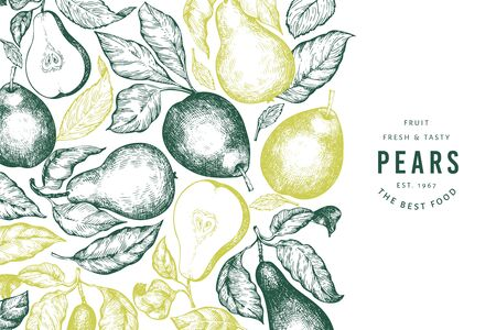 Pear design template. Hand drawn vector garden fruit illustration. Engraved style garden vintage botanical banner.